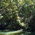 17 oct 09 - Malanda, tree kanguroo (13)