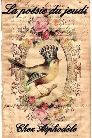 chromo-oiseau-couronnc3a9-ana-rosa12