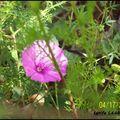 Encore des fleurs