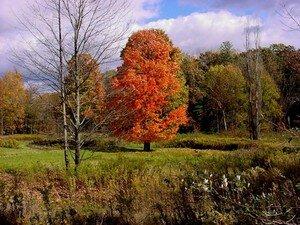 automne0012