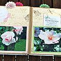 Quelques roses (19) copie