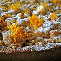 tarte à l'orange, streusel à la cardamome