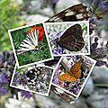 Pages Scrap européen Insectes