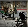 Les chats errants du parc nakamura