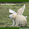 Ours blanc ailé