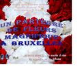 Un tapis de fleurs pour vous tous ! ! !