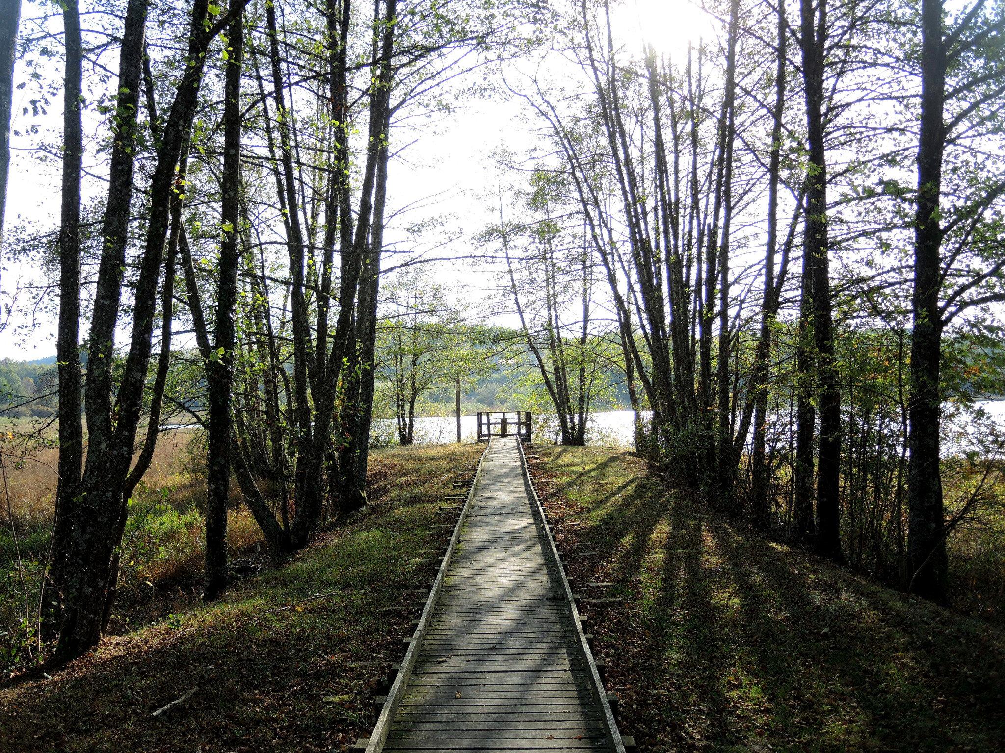 Saint-Brisson, Maison du parc, sentier de l'étang du taureau, passerelle