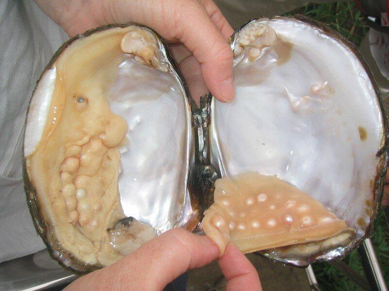 perles (45)