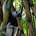 La forêt des lémuriens