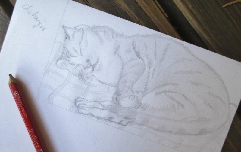 Croquis de Chataigne endormi - CélinArtisa