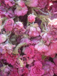 ROSES_ANCIENNES_5