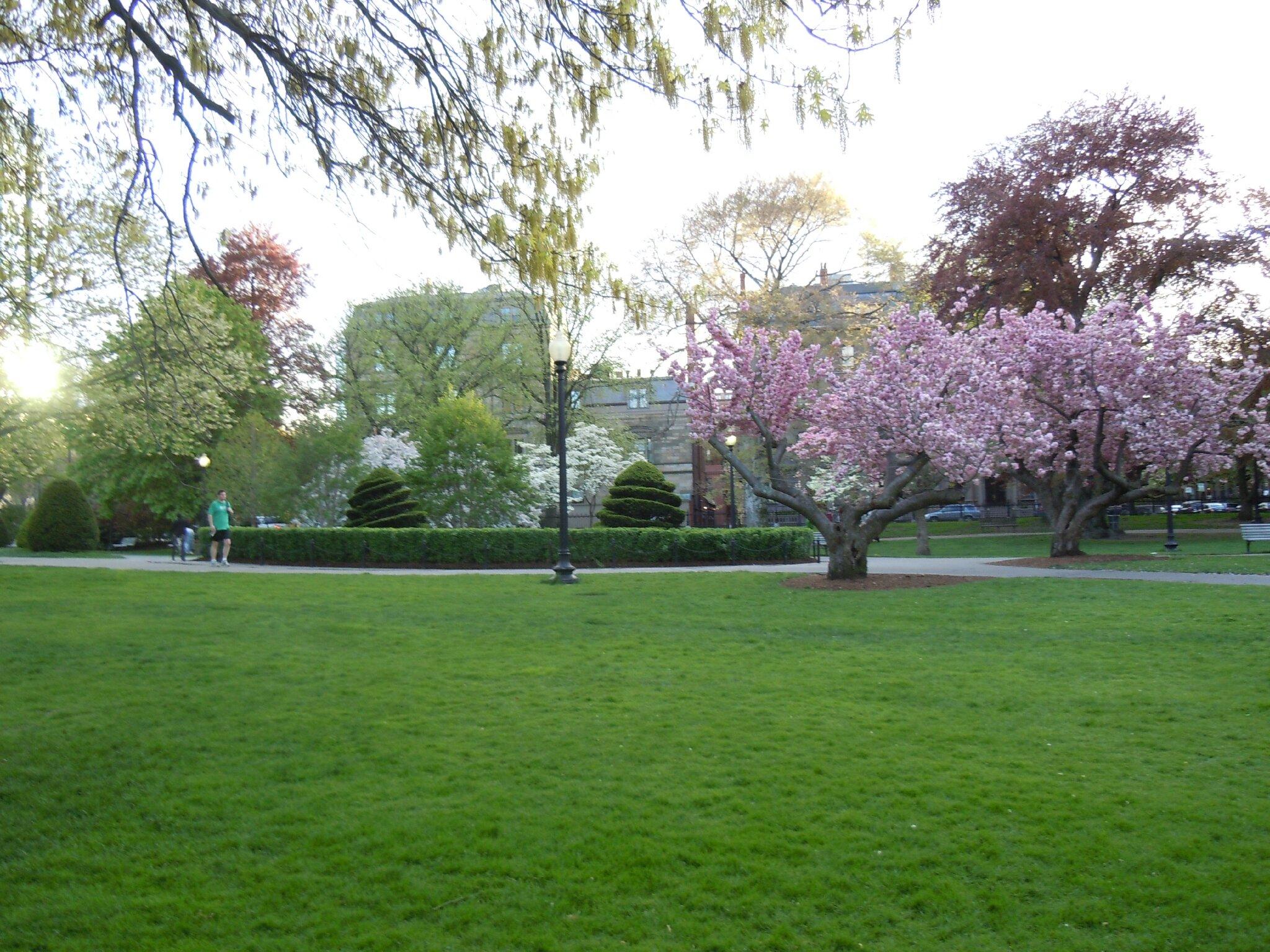 BOSTON COMMON PARK (172)