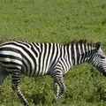 2010-03-09 Ngorongoro (197)