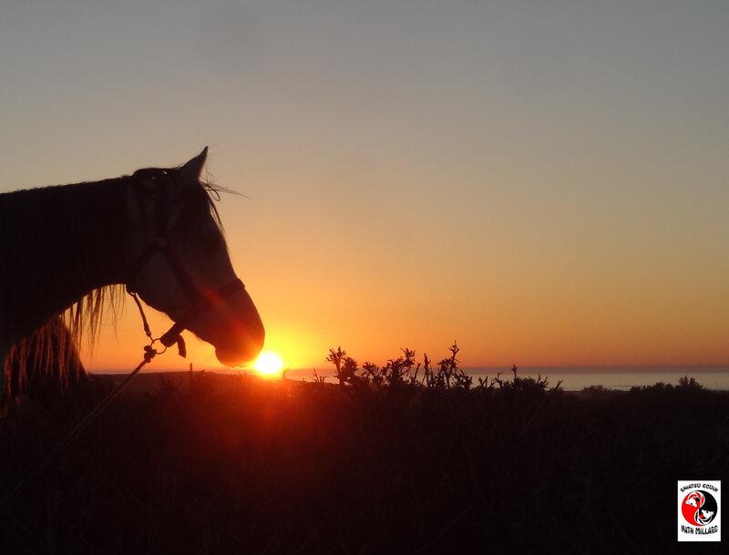 cheval soleil