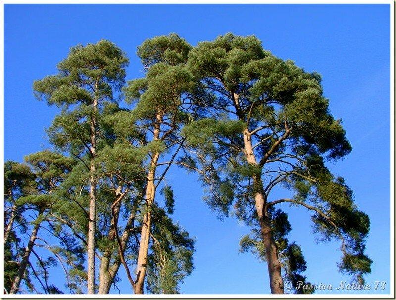 La forêt de Rambouillet vue sous un autre angle (19)