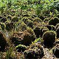 20 septembre 2017: découverte de l'agriculture et de la gastronomie du plateau