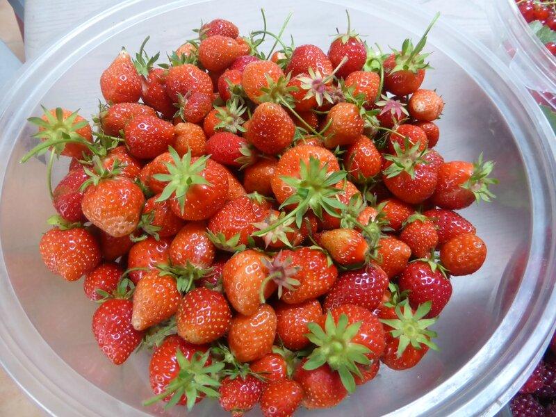 13-fraises
