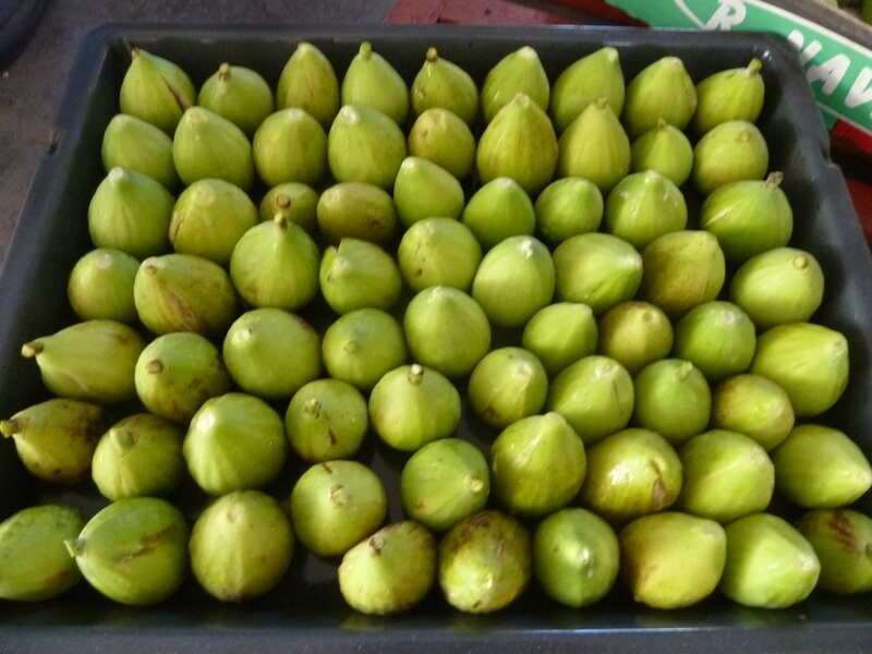 24-figues (5)