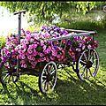 jardin charrette