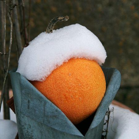 Orange_beret_blanc