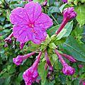 Fleurs mouillées3