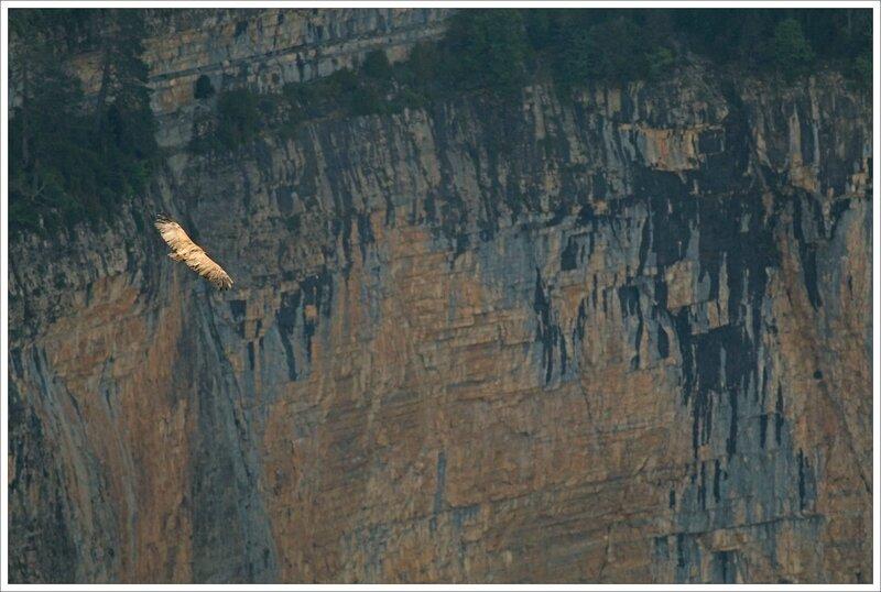 Haut Aragon 120615 Mondoto 81 vautour falaise couleur