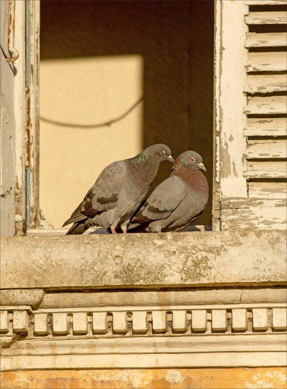 ville pigeons soleil 2 270915