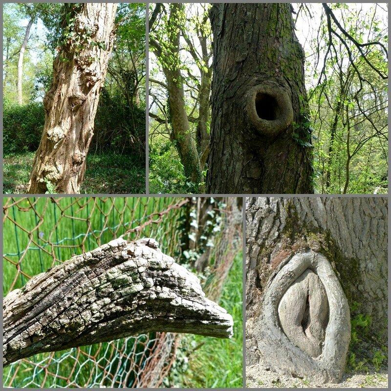 arbres curieux