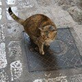 chat Dubrovnic 6