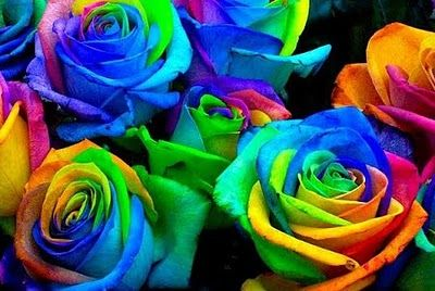 rose_multicolore