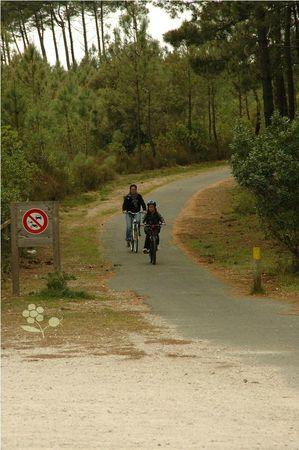 Lacanau Océan_vélo en forêt de pins et genêts