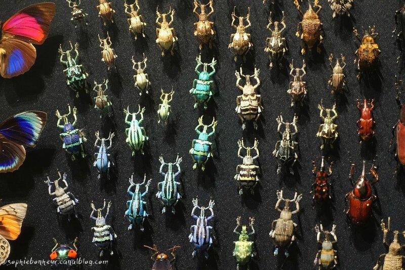 esp scarabés