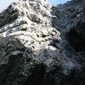 les pingoins d'humboldt se dorent au soleil...
