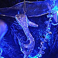 IMG_20181214_172932_HHT