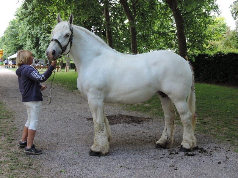 Salsa du Bois Hure - 4 Juin 2017 - Concours d'élevage local - Rue (80) - 1ere (Non Suitées)