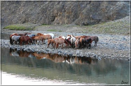 1_mongolie_chevaux_reflets