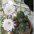 Cactus, suite...
