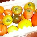 tomates... collection