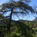Forêts des AURES