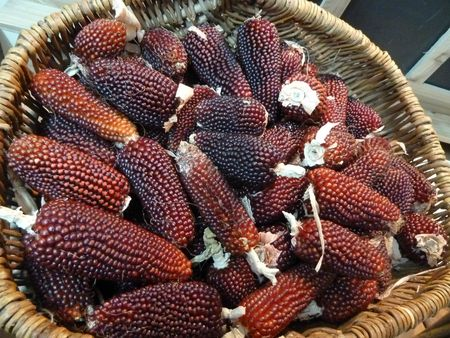28-maïs fraise (10)