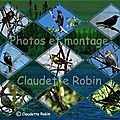 CR-1104-1113-B - Petits oiseaux