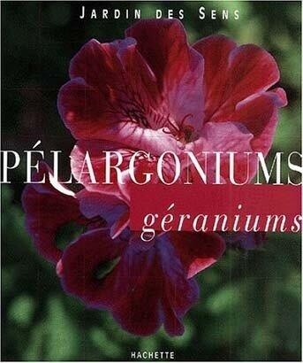 PELARGONIUMS géraniums