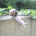 Ma joyeuse bande d'escargots!