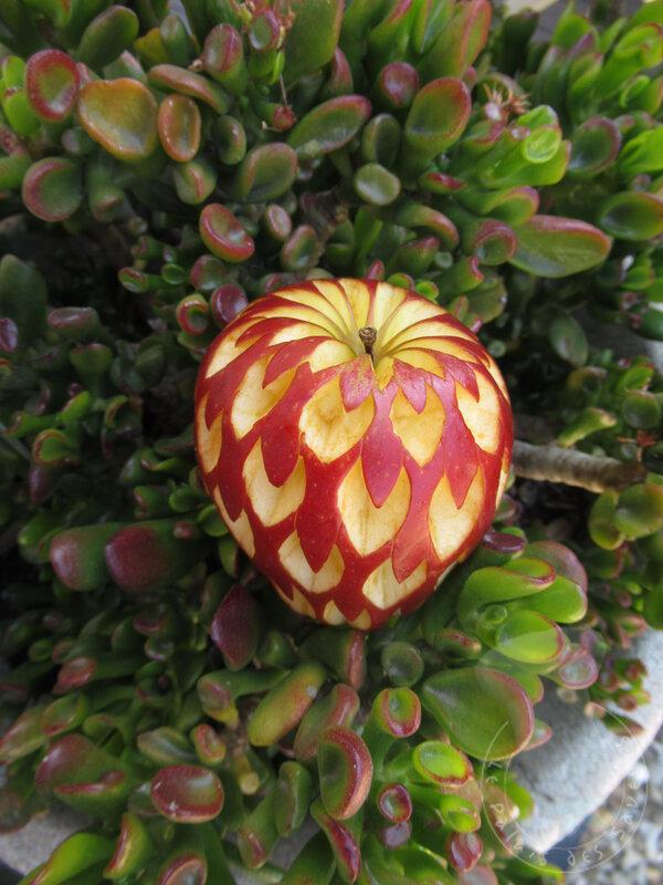 Pomme fleur#5