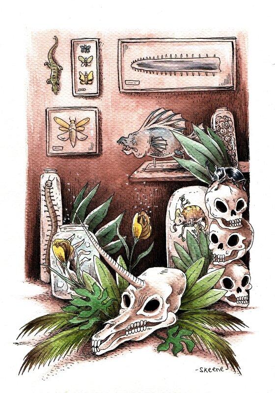 cabinet-curiosite