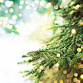 sapin-noel-ecologique-naturel-artificiel