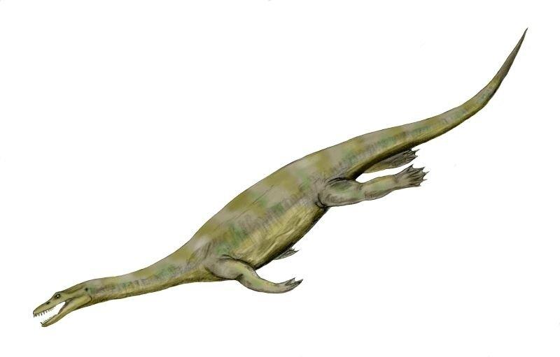Nothosaurus_BW