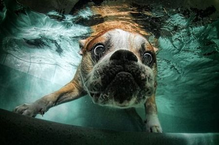 diving_dogs_photography7_550x366