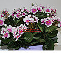 Arrivage de fleur artificielle :jarindière, et coupe et pot de fleurs et plantes artificielles
