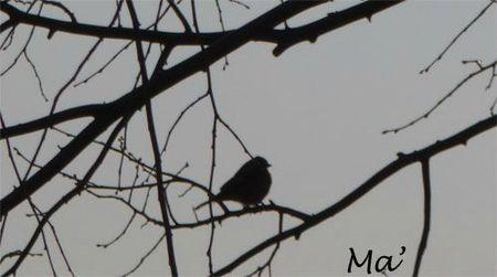 oiseau_120212